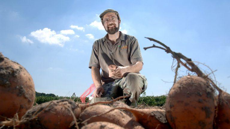 Ken Pecota in a sweet potato field.
