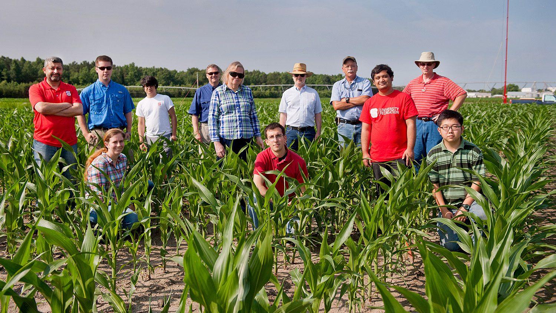 Researchers in a corn field.