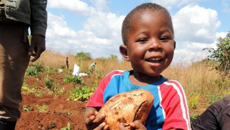 Young child with sweet potato in farm field