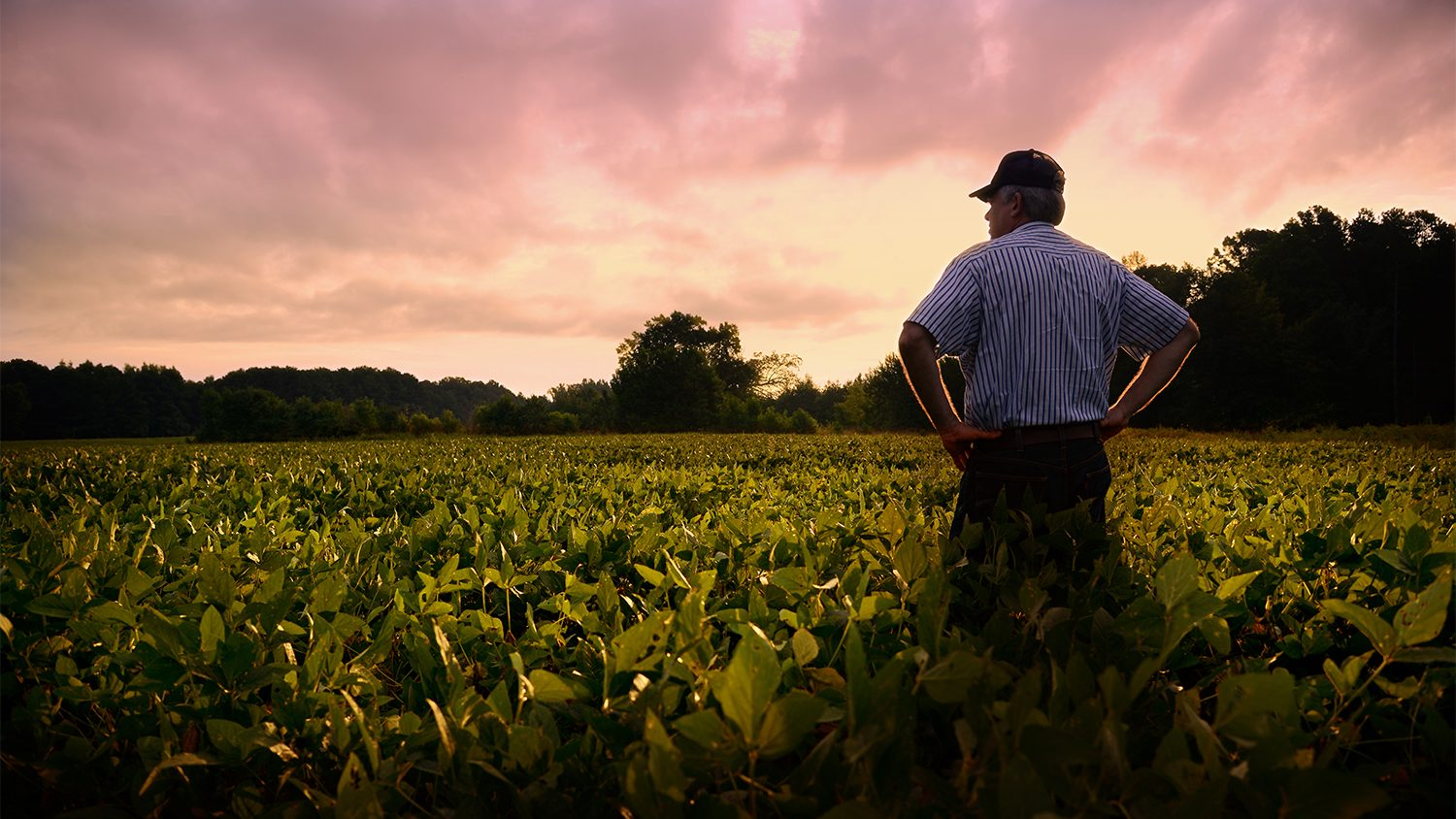 Farmer standing in soybean field.