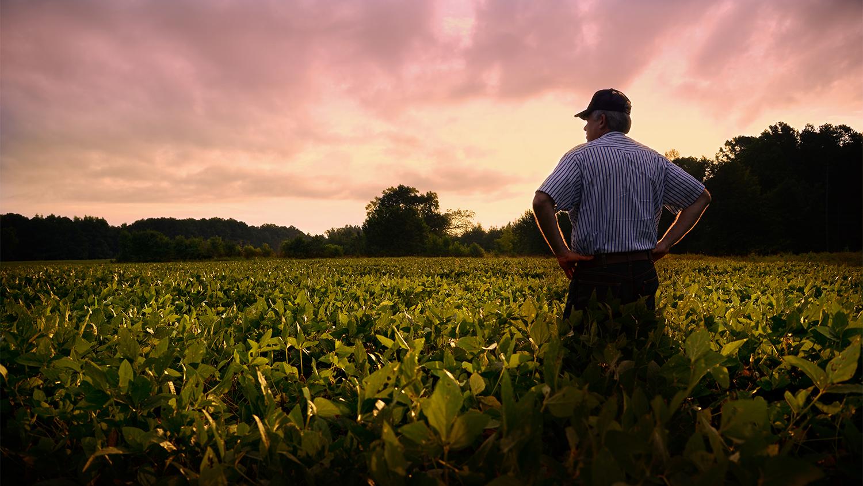 Farmer standing in soybean field.