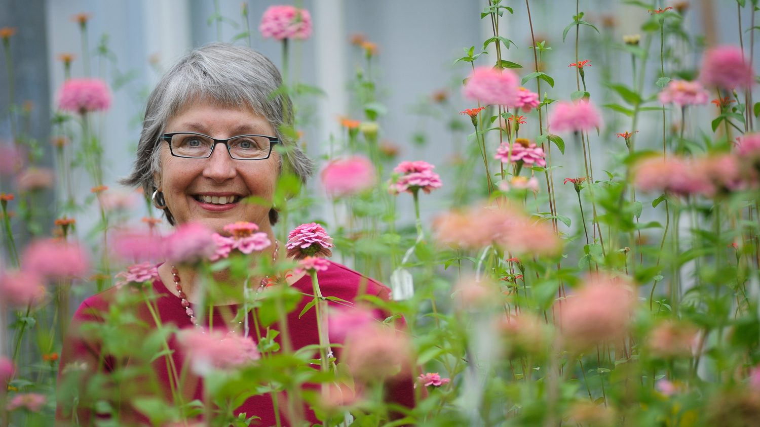 NC State University horticulture professor Julia Kornegay poses amongst pink flowers.