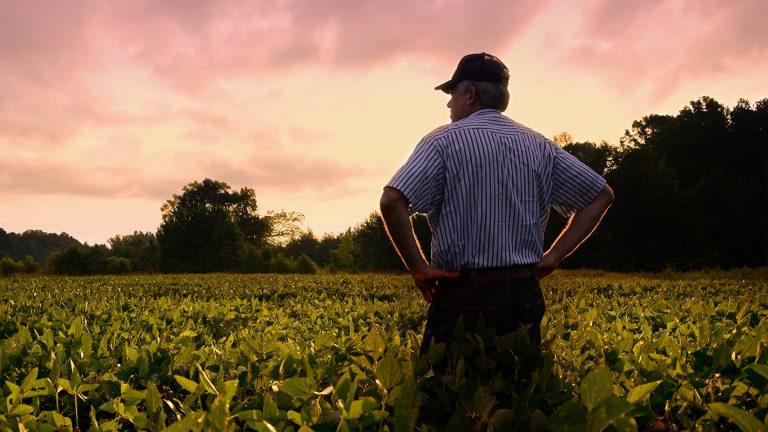 Farmer standing in his soybean field.
