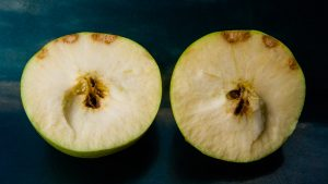 Apple with brown spots caused by brown marmorated stink bugs.