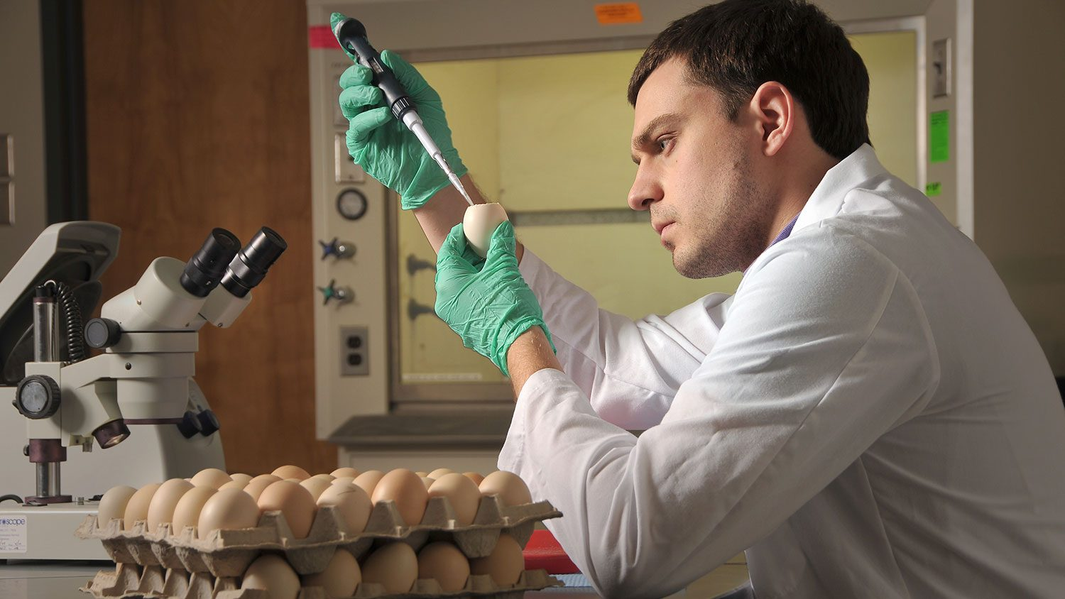 Researcher examining egg in labe