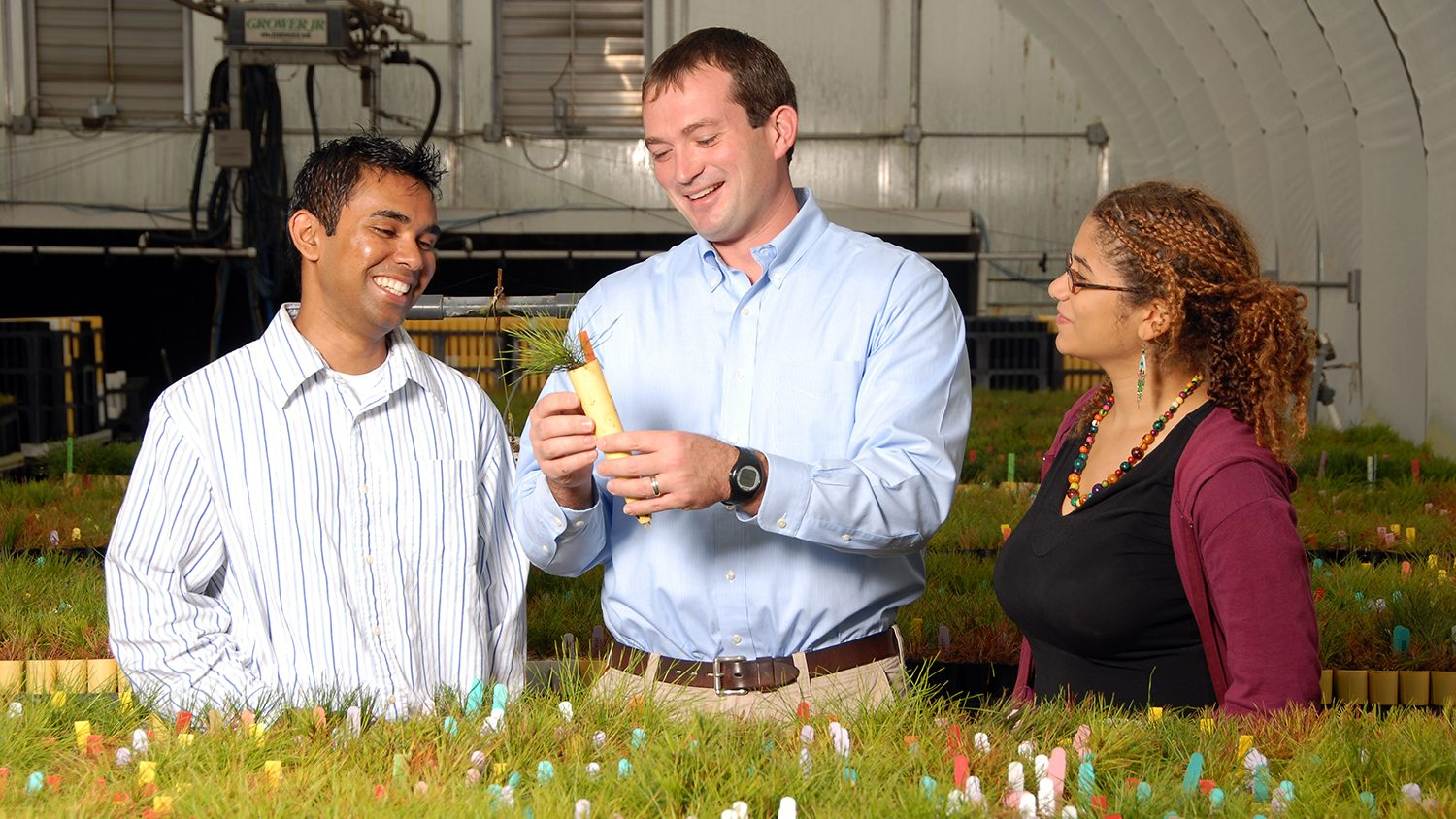 Researchers looking at plant in greenhouse