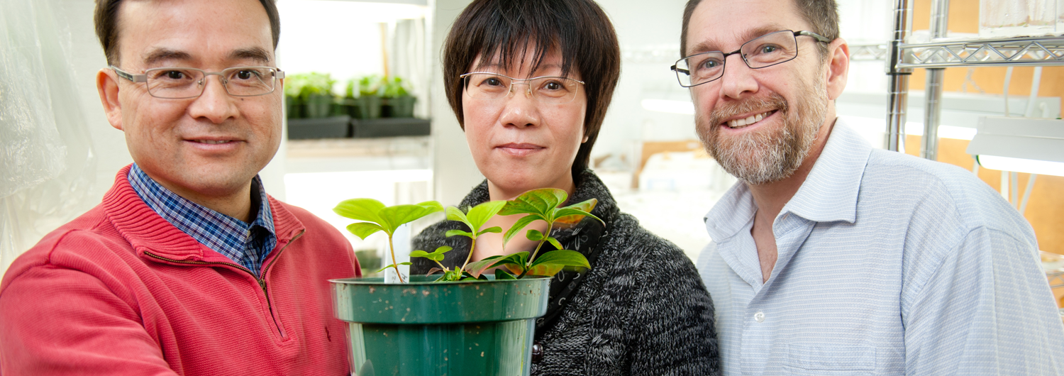 NC State College of Agriculture and Life Sciences faculty hold a small, potted dogwood in a lab
