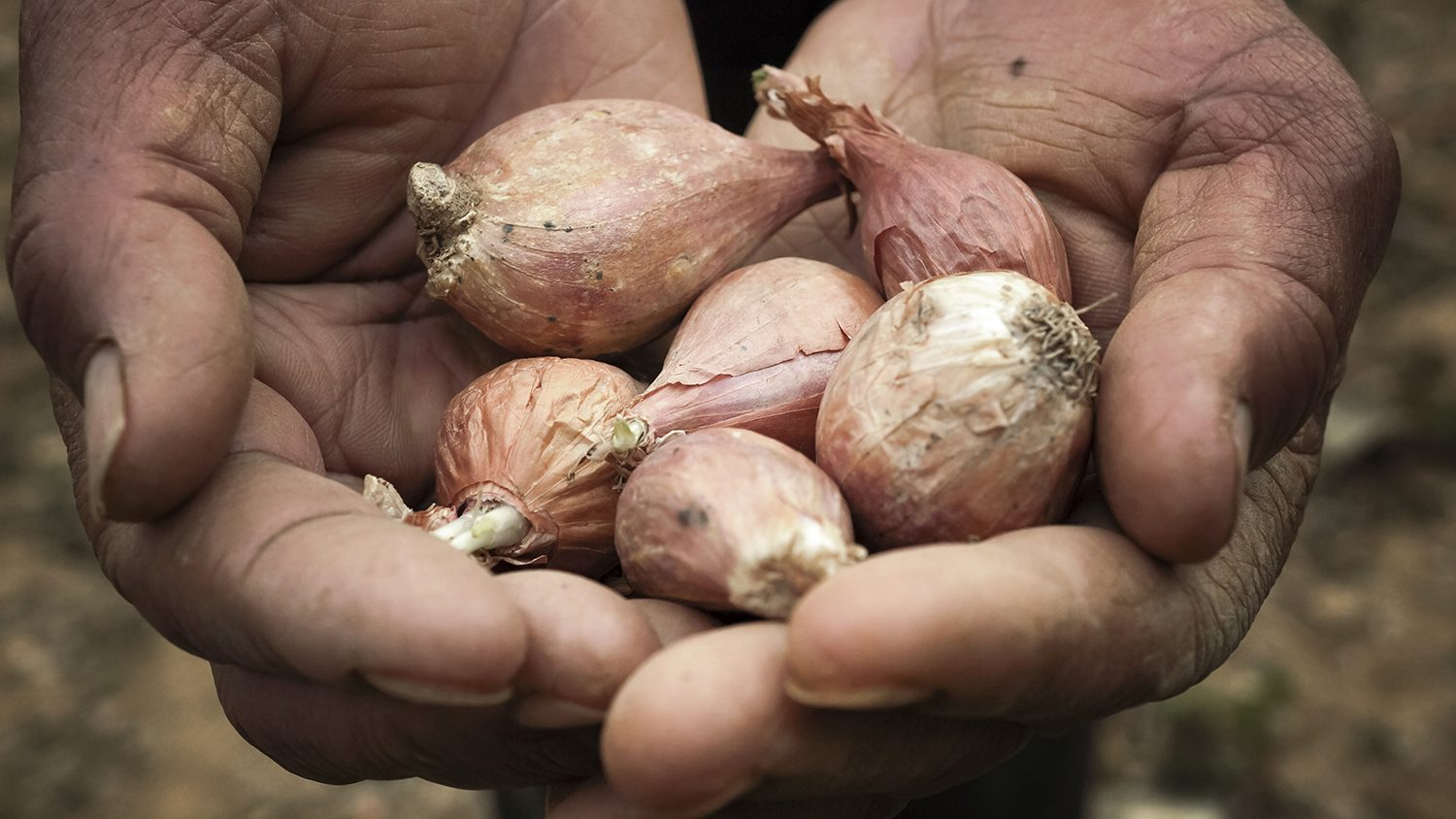hands-with-red-onions