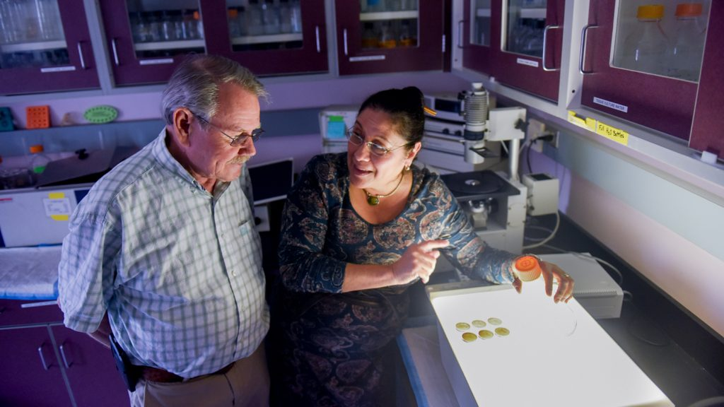 Dr. Dennis Brown and Raquel Hernandez of NC State's CALS research the Zika vaccine.