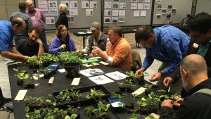 Seated at a large table, Extension agents try their hands at grafting plants.