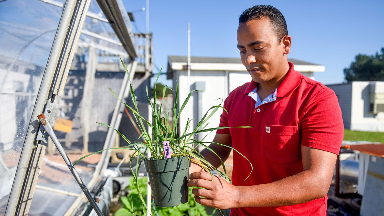 NC State Entomology and plant pathology Ph.D. student Sayed Mashaheet