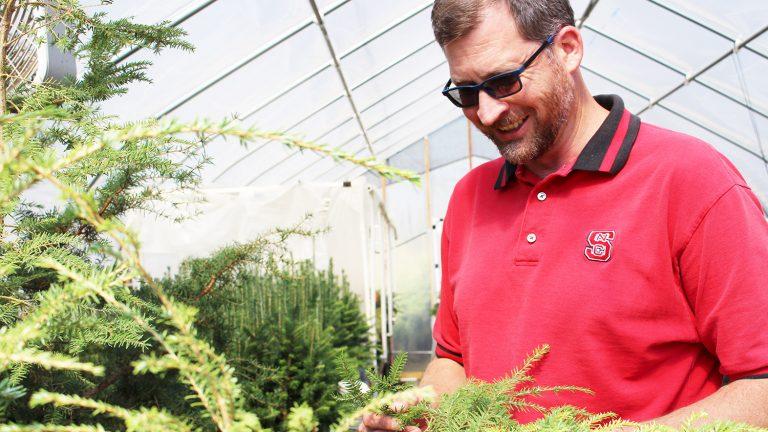 Ben Smith examines a hemlock tree.