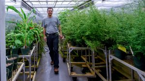 Chuck Gibbs walks among plants in a lighted growth chamber.