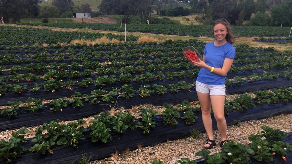 CALS senior Christina Harvey in a farm field.