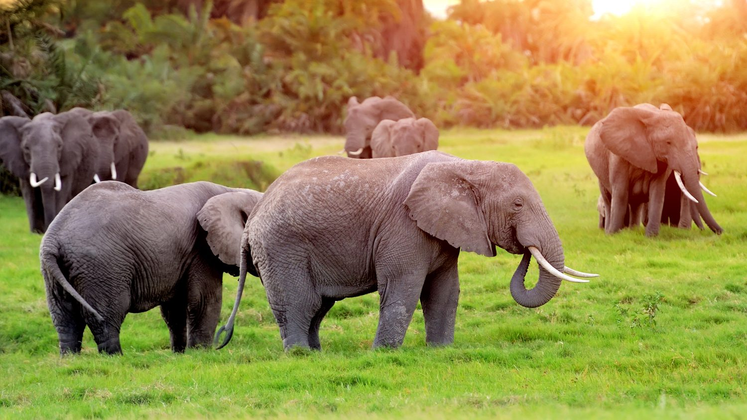 Elephants on game preserve in South Africa