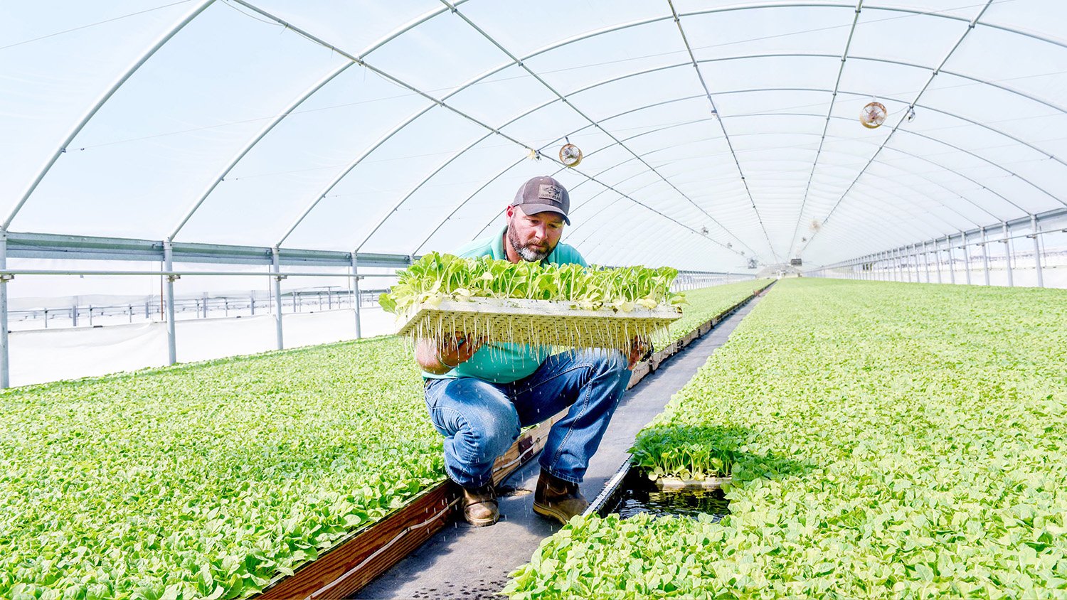 Bryan Salmons holds a tray of tobacco transplants in a Barnes Farming Corp. greenhouse.