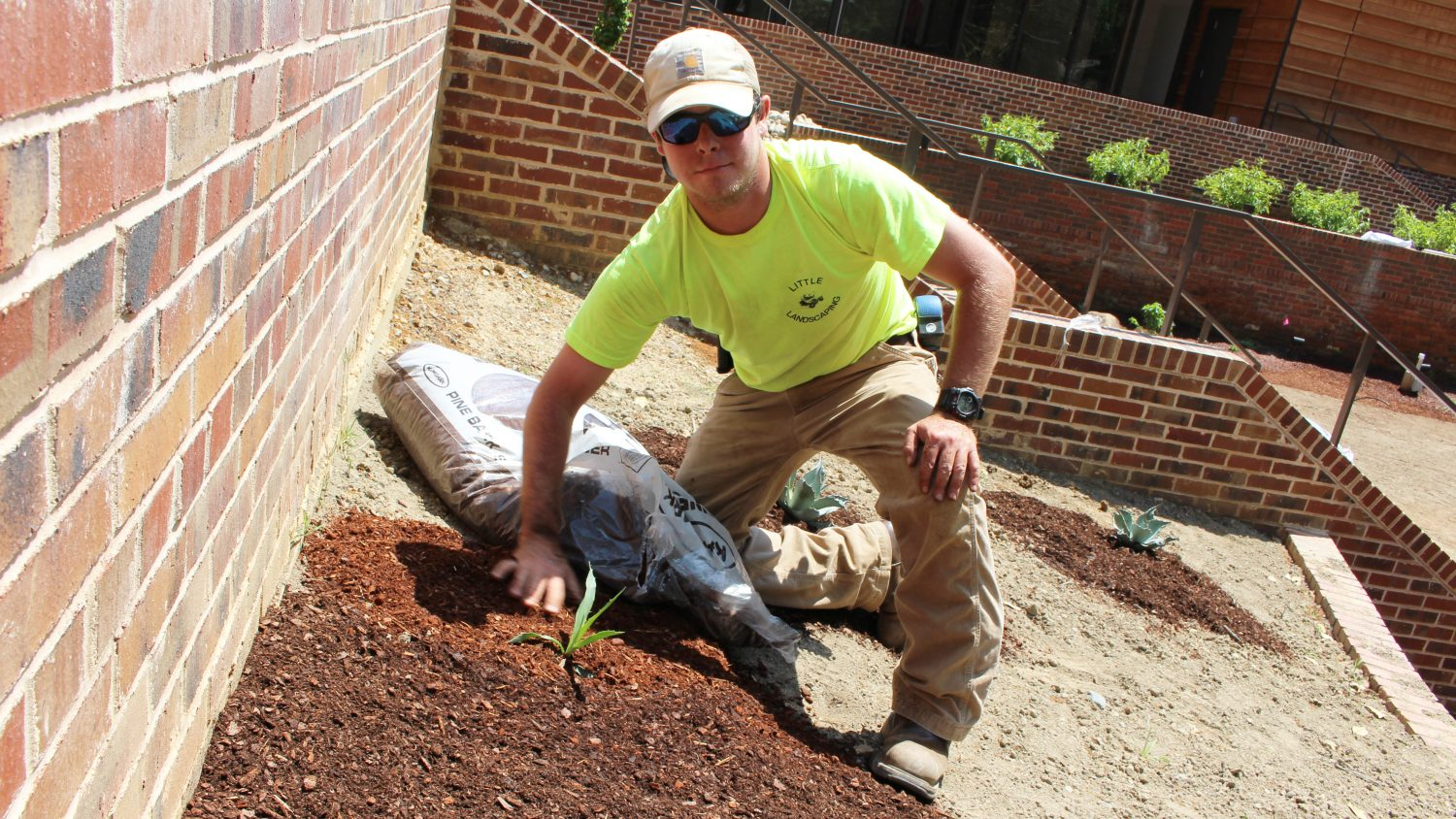 Student near brick walls spreading pine bark mulch around a plant.