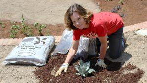 Professor spreading mulch around a plant.