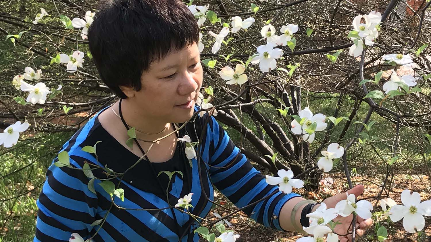 Jenny Xiang surrounded by a flowering dogwood in full bloom.