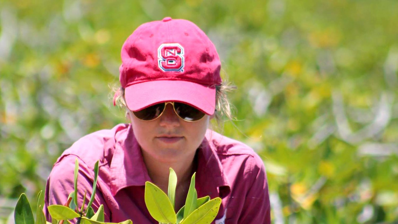CALS student Ryann Rossi studies mangroves