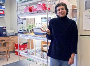 Imara Perera Research Space Plants