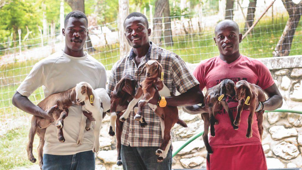 NCSU Haiti Goat Project