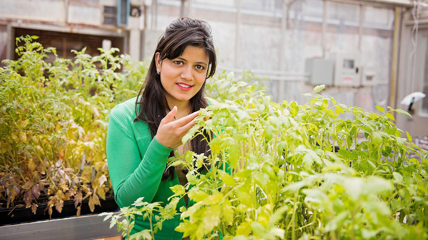 CALS Ph.D. student Pragya Adhikari in a greenhouse