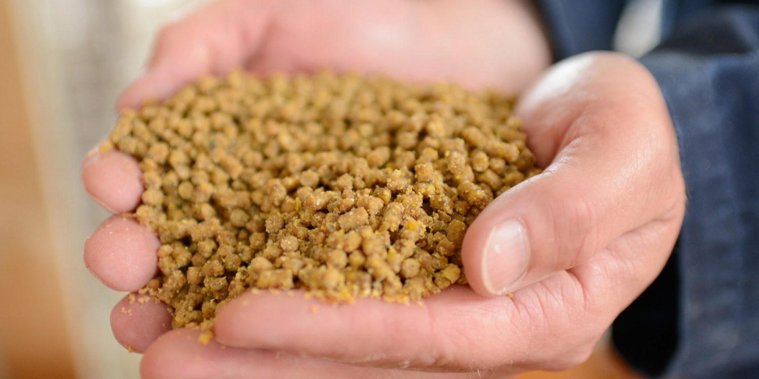 Cupped hands holding animal feed.