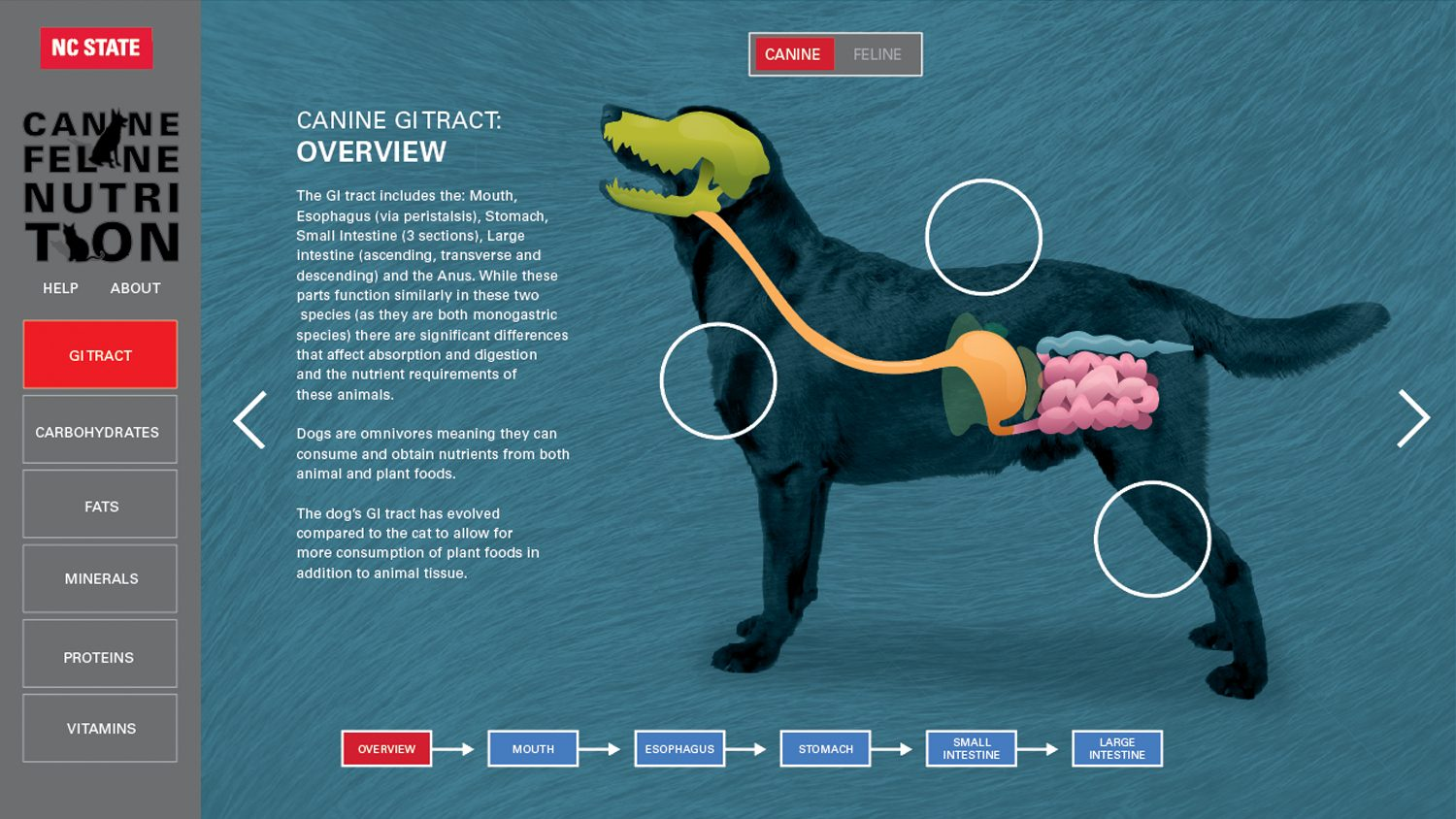 The Canine GI tract overview from the web tool created for ANS 590