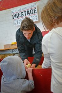 Prestage Dept. of Poutry Science student introduces a child to a baby chicken during Farm Animal Days.