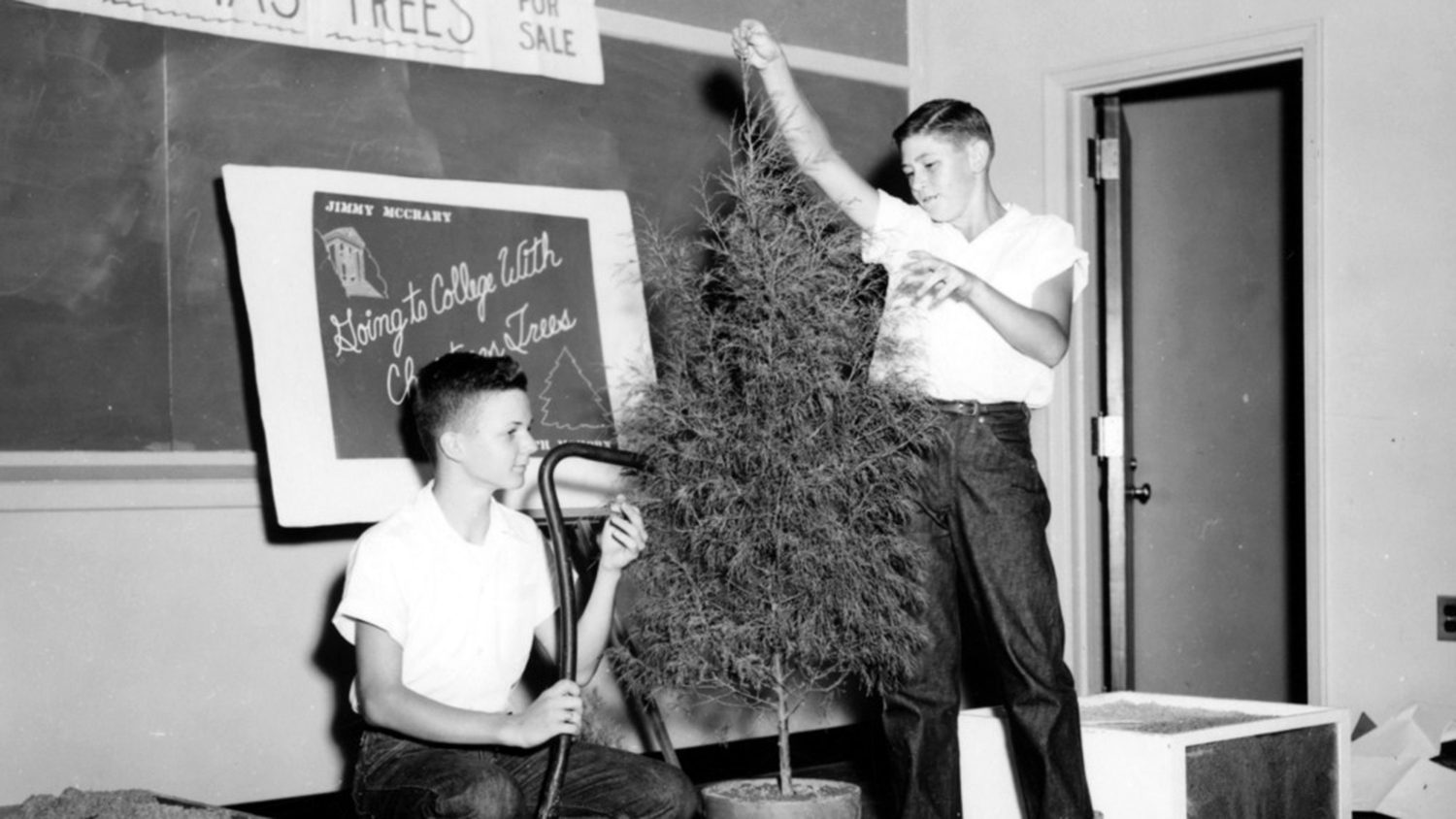 Two 4-H club boys give a demonstration on Christmas trees during district contest day, 1954