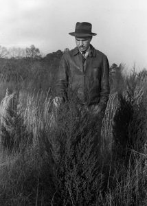 County Agent J. C. Powell examining cedar plantings in 1942.