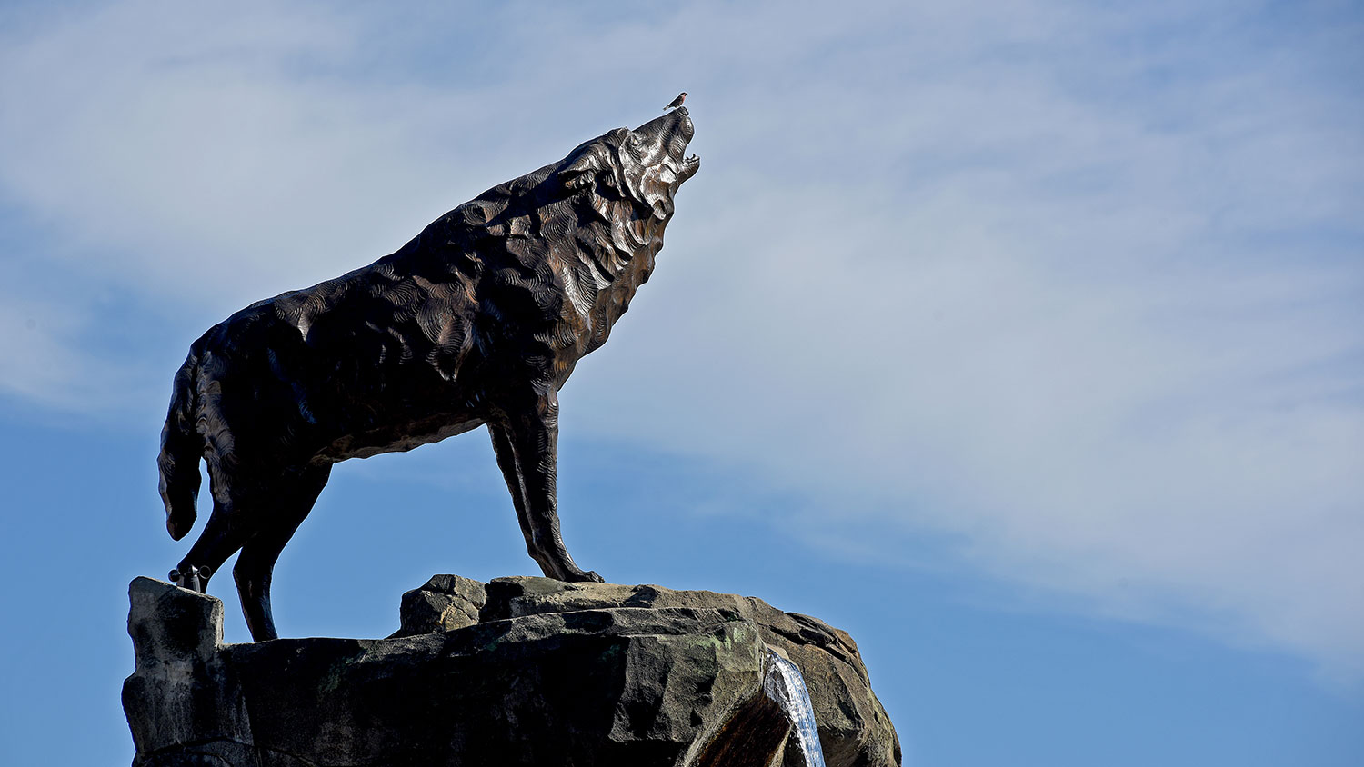 NCState wolf statue