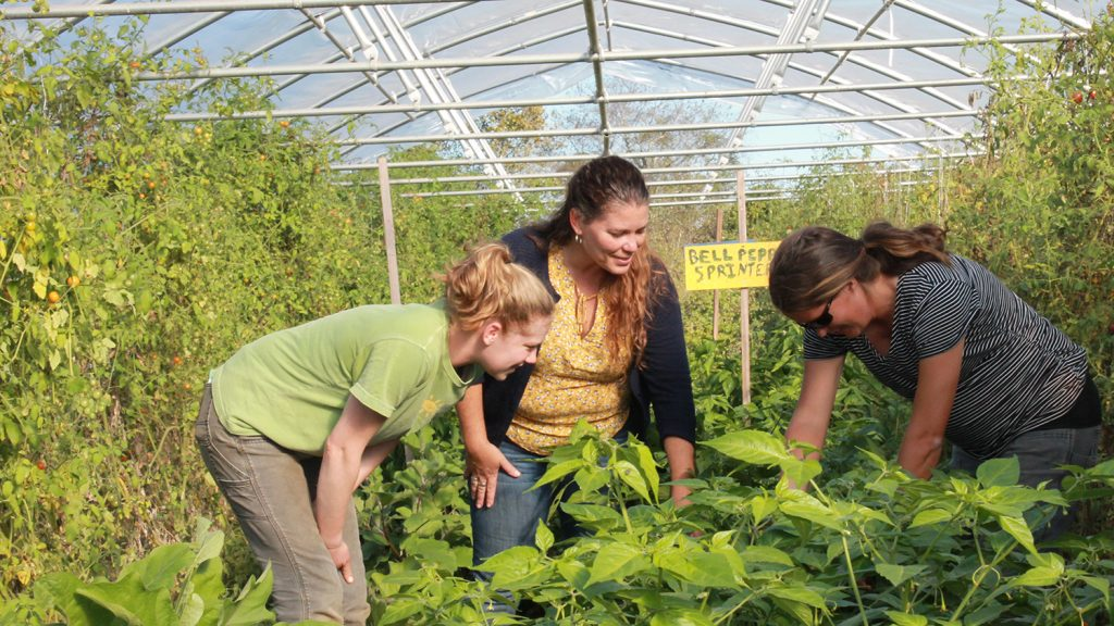 Three women in a hoop house, inspecting plants.