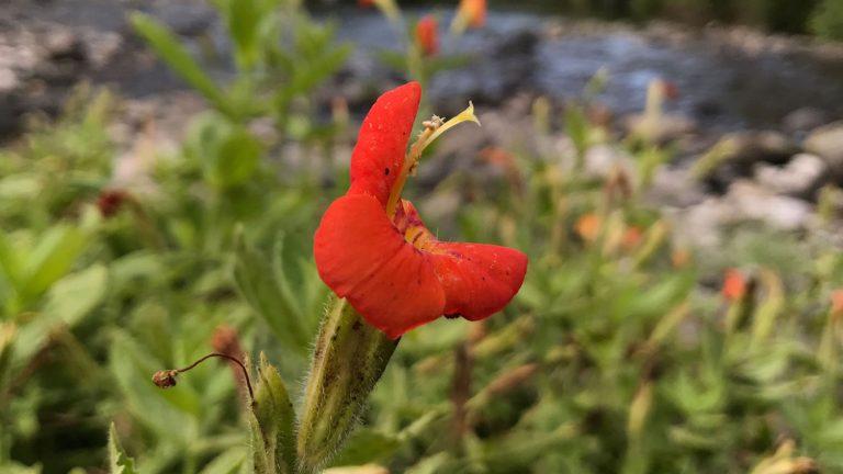 red flower growing near water