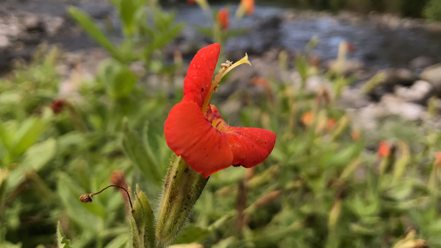 red flower growing near water