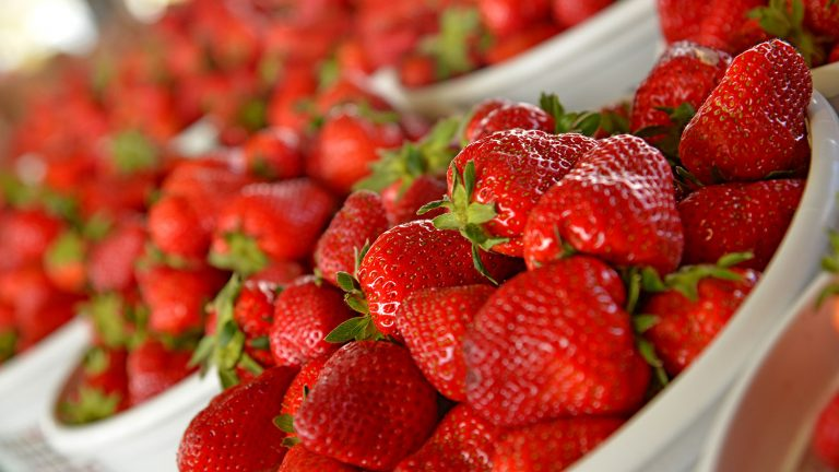 Fresh NC strawberries for sale at the State Farmers' Market.