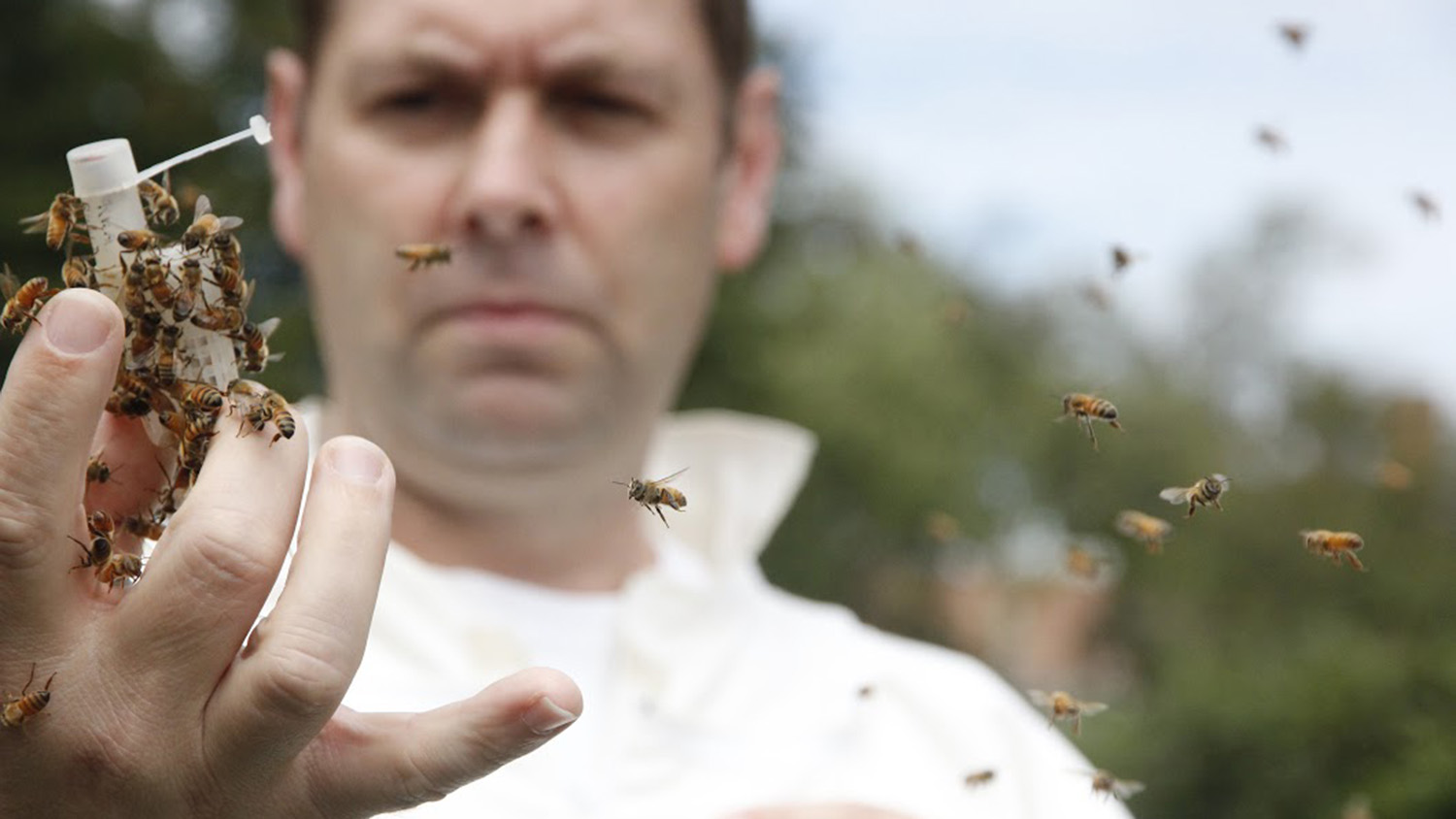 David Tarpy with honey bees