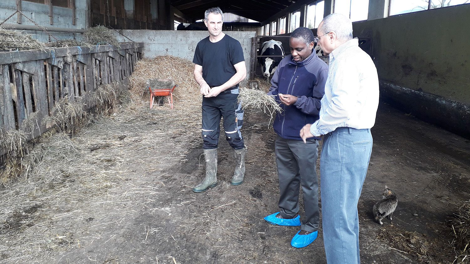 Three men standing together in a barn