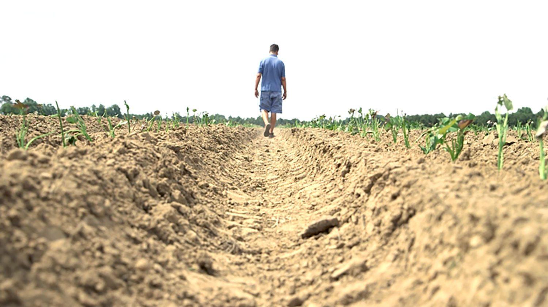 Farmer walking in a field