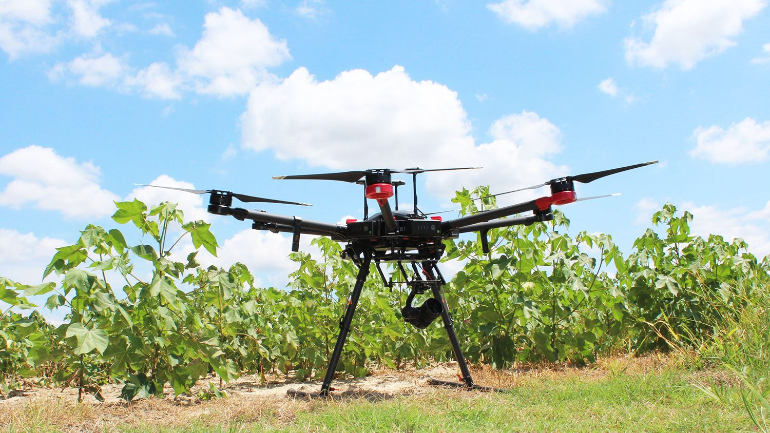 Unmanned Aerial Vehicle in a field
