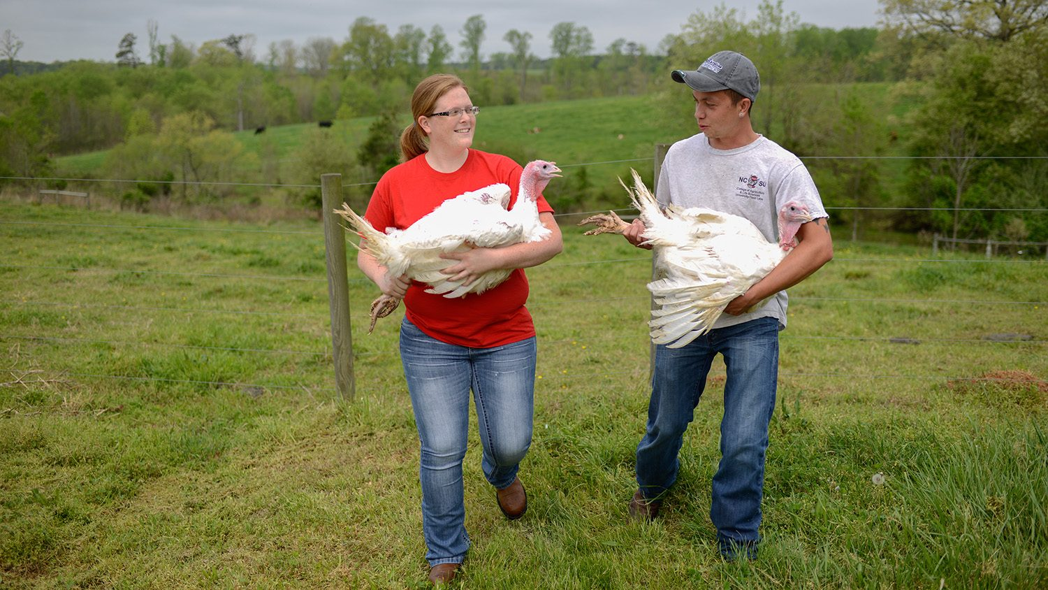 Students with turkeys at the poultry treaching unit.