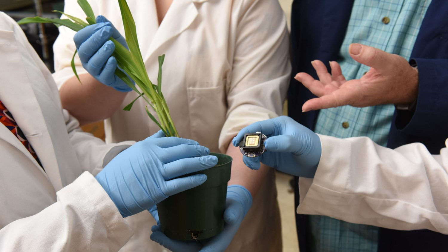 Scientists placing a sensor into a plant pot