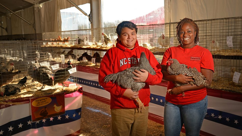 4-H'er and Poultry Science student holding chickens