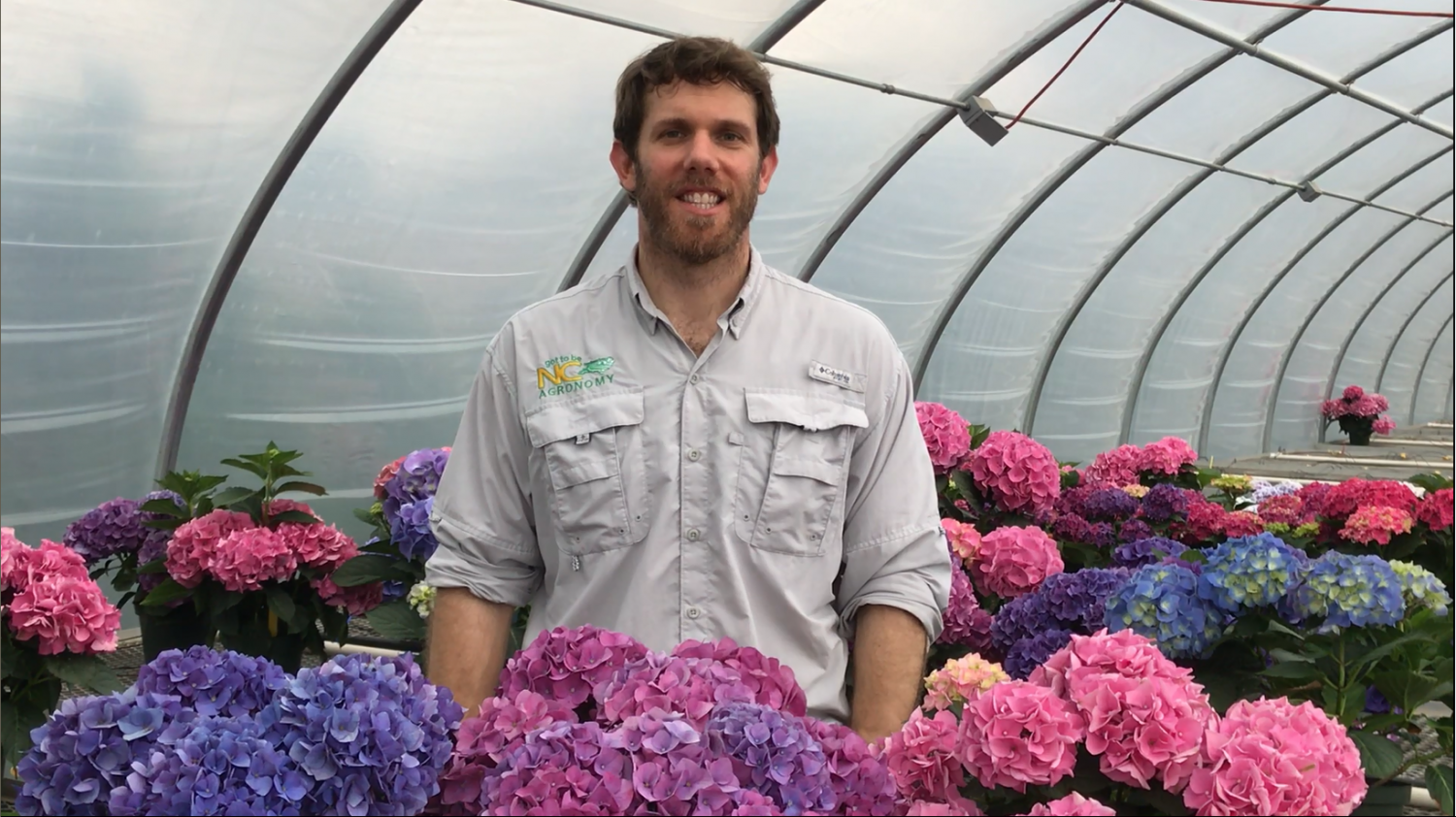 Man standing in a greenhouse filled with pink, purple, and blue hydrangeas