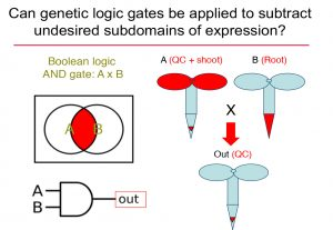 Graphical image of the Boolean logic AND gate