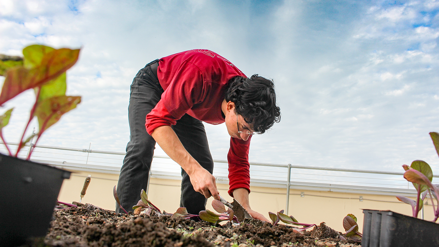 Student with trowel helps renovate the garden on the Talley Student Union's roof.