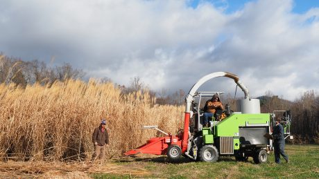 Three men from the Mountain Horticultural Crops Research and Extension Center working together to harvest the miscanthus crop.