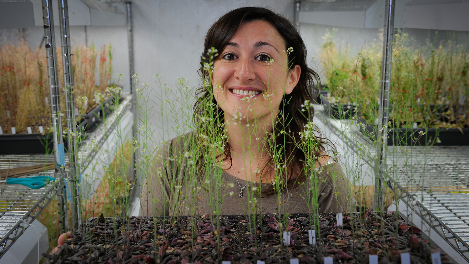 Scientist in a lab holding a tray of Arabidopsis