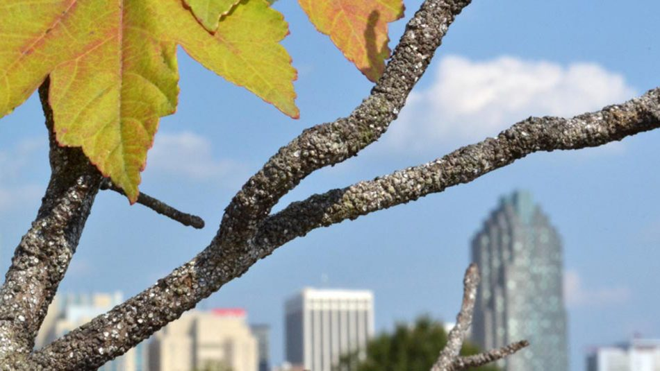 Entomology and Plant Pathology professor from NC State's CALS weighs in on tree health in cities